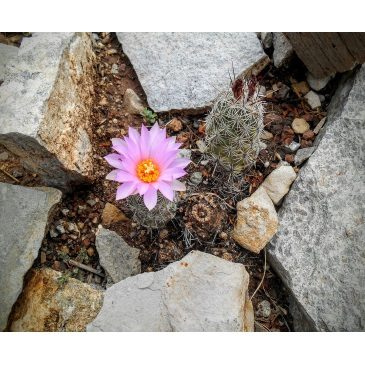 Laws of attraction: Are you married to a rock or a flower?